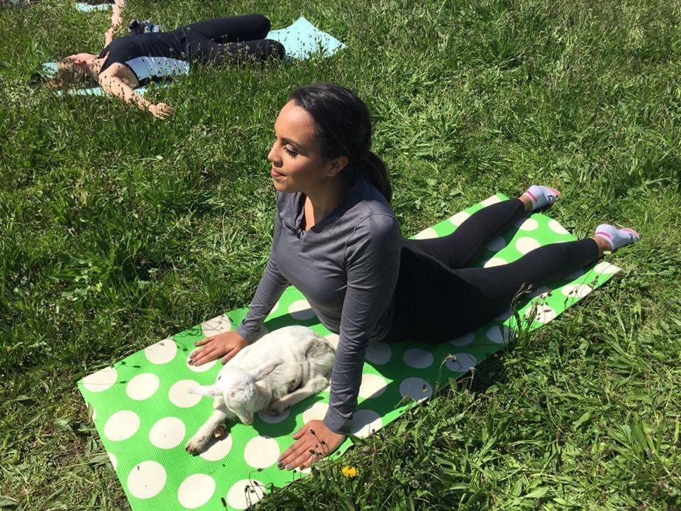 No Kidding: Goat Yoga Comes to Rhode Island