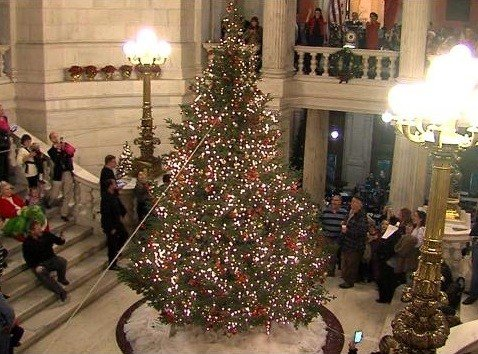 Rhode Island State House Christmas Tree Is Lit ABC6 Providence  - Christmas Trees Ri