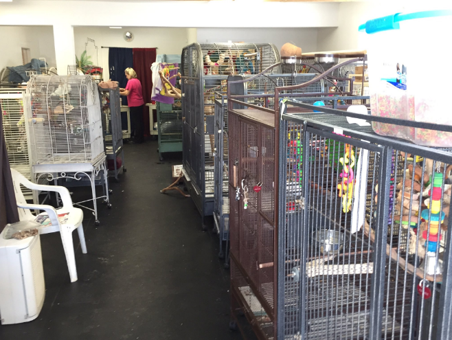 Nonprofit in Warwick sheltering 130 neglected exotic birds - ABC6