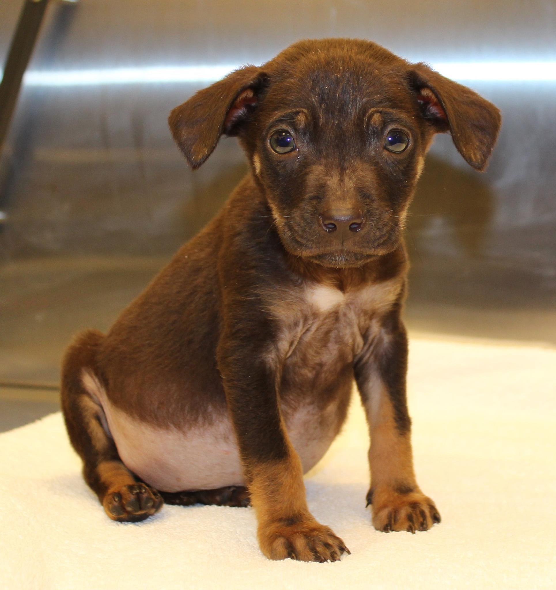 Rispca Warning Purchasing Pets On Craigslist Abc6 Providence Ri